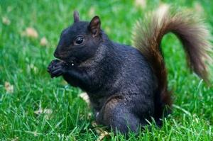 Squirrel at City Hall Park