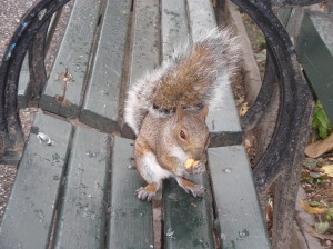 Possibly the cutest squirrel